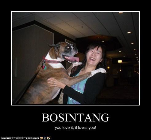 bosintang.jpg