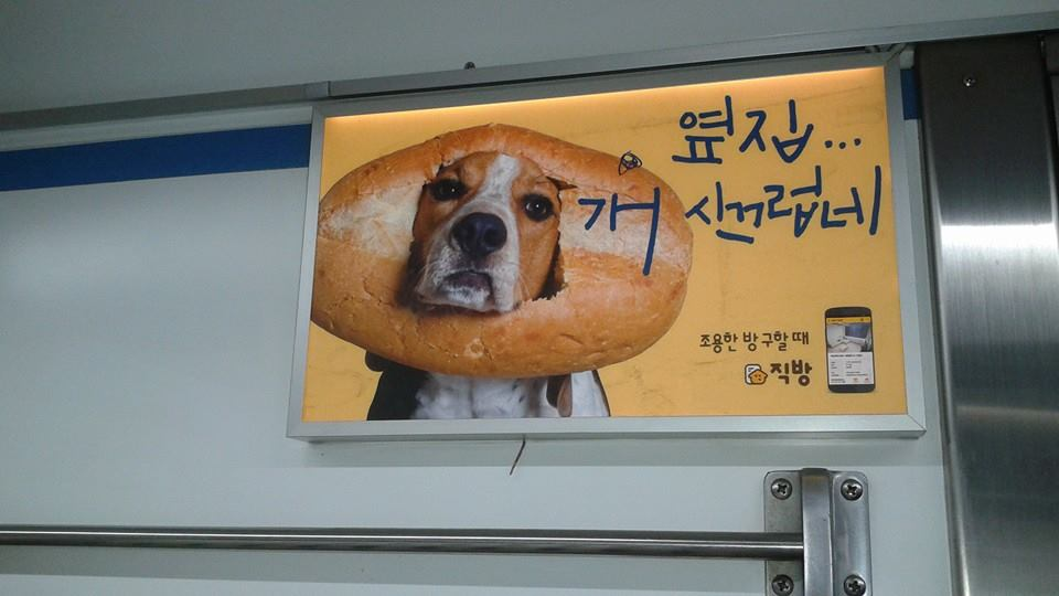 Inbred dog or a Korean corndog.  You decide.