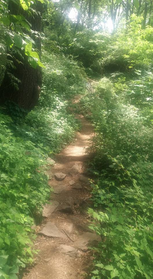 I found some shady trails on which to meander my way back down the mountain...