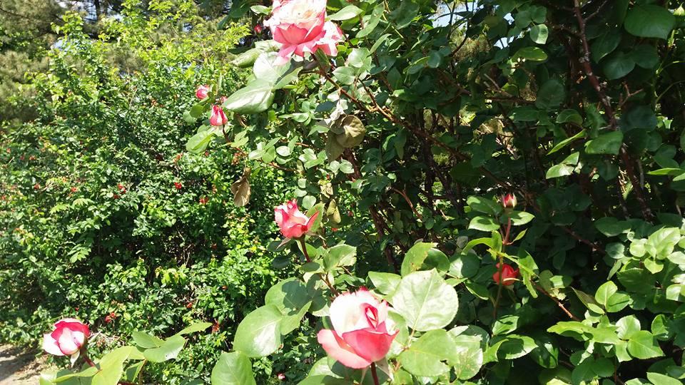 It was bloomin' beautiful I tell ya...