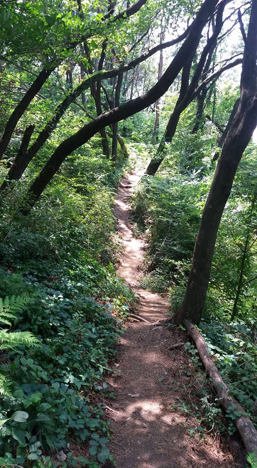 A shady trail on a hot summer's day is like the ice in your tea.